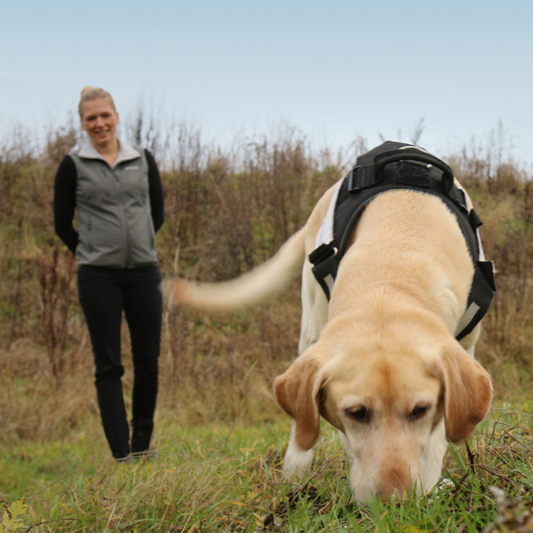 Woman overseeing pollution detection dog working | WSP