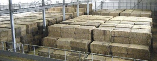 Bales of straw in plant