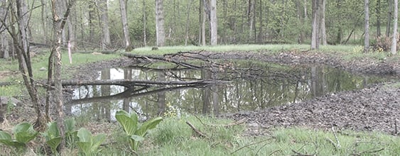 Vernal pool in wooded area surrounding Stewart International Airport